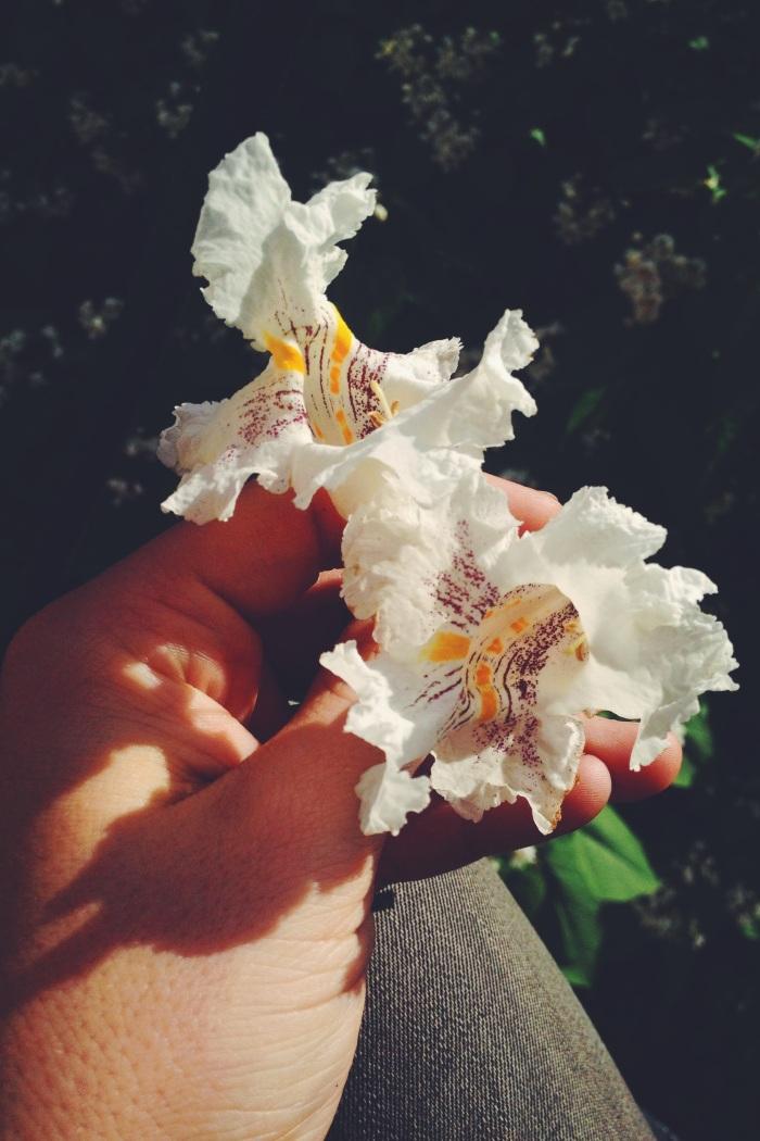 Odd Paper Flower